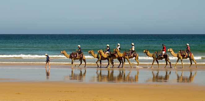 Beach, Camel ride, reflections, tourist. Birubi beach. Stockton beach.