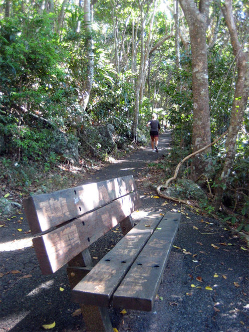 Walking track at Burleigh Heads National Park