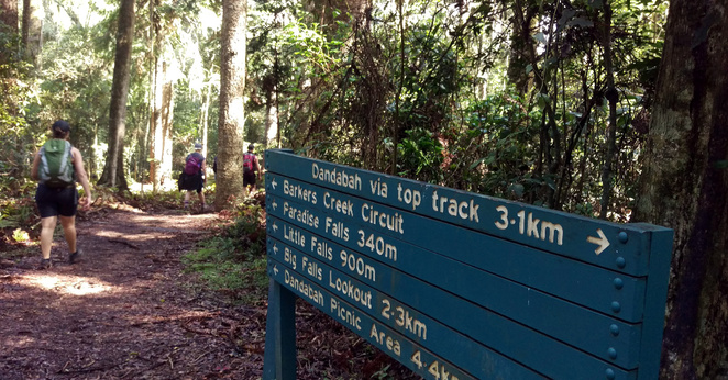 Walking in the Bunya Mountains National Park