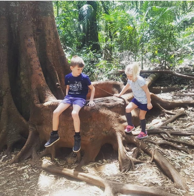 bush walk, hike, waterfall, Tamborine, family, fun for children