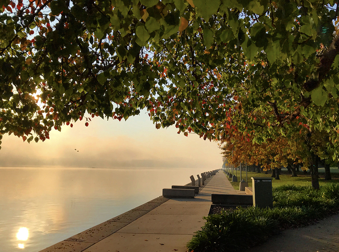 Canberra, autumn, sunrise, leaves, trees, fog