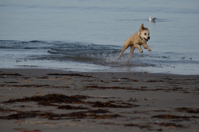 dogs off lead at beach