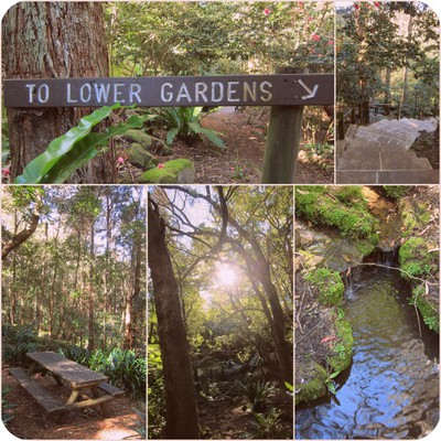 Lisgar Gardens, Hornsby, Hornsby Parks, Hornsby Attractions, Hornsby Wedding Venue, Hornsby NSW, Hornsby Fish Pond