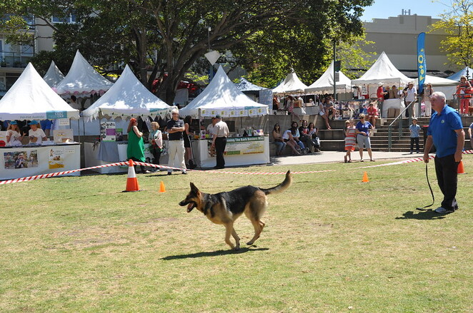 pet day mosman, mosman festival