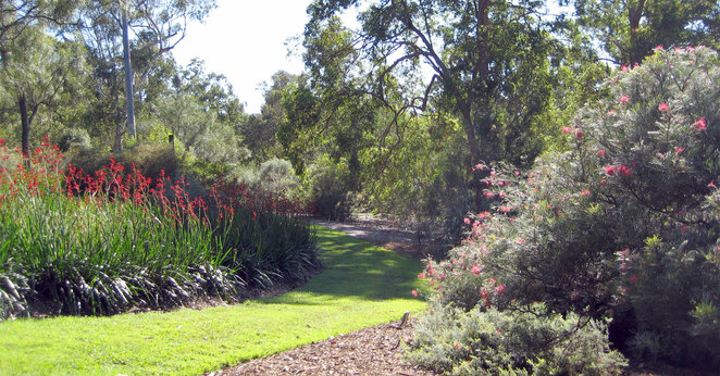 Enjoy Australian flowering plants in this section of the park