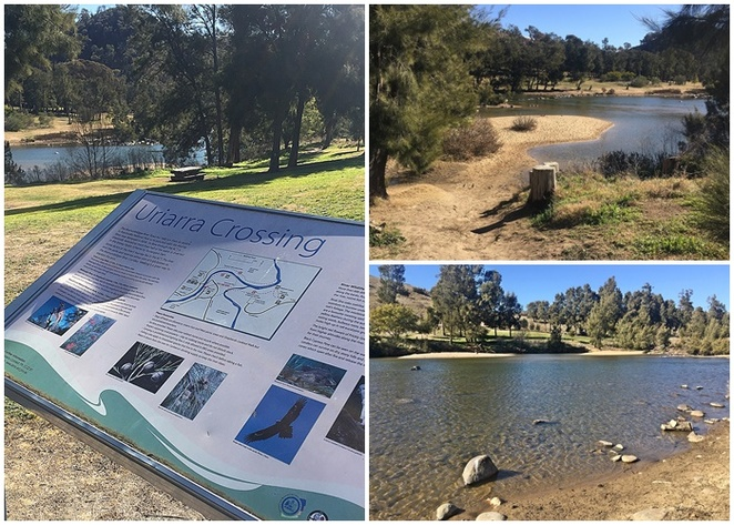 uriarra crossing, canberra, dog friendly areas, murrumbidgee river, ACT, river swimming, dogs, walks, BBQs, picnics,
