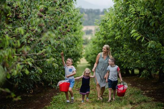 9 places close to Melbourne to pick cherries