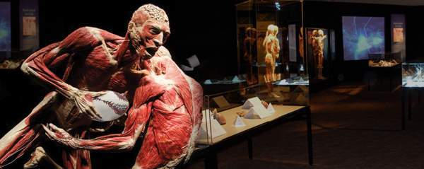 Body Worlds Vital Exhibition