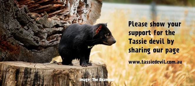Support the Save the Tasmanian Devil Appeal