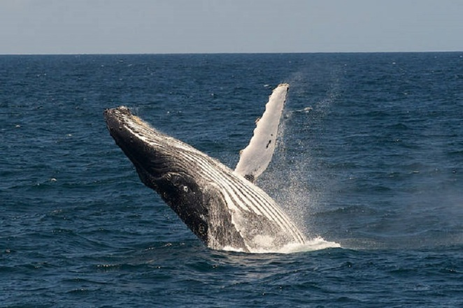 whale watching sydney nsw
