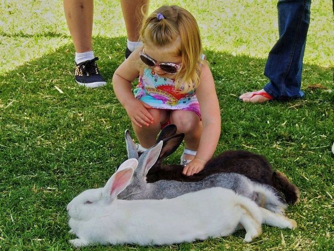 What's On in Adelaide, july, things to do in july, in adelaide, markets, school holidays, school holiday activities, free, things to do, bunny rabbit