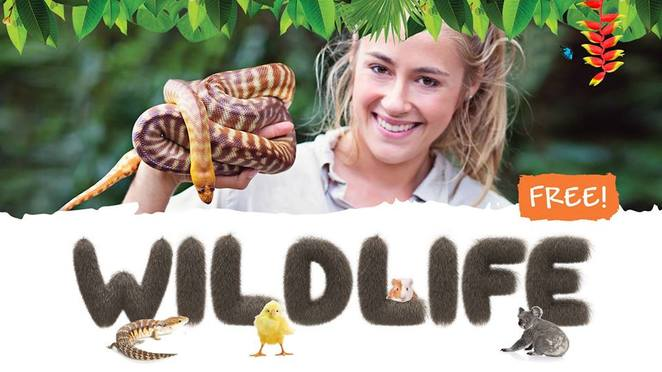 Wildlife, FREE School Holiday Wildlife Shows, cute and fluffy, baby chickens, bunny rabbits, guinea pigs, sleepy koala, birds, colourful reptiles, free entry, Walter the water dragon, the Ginger Cafe, pack a picnic, Moreton the train, Overboard rides on a boat
