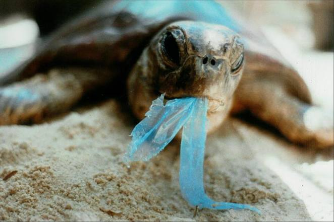 World Oceans Day, Clean Up Australia