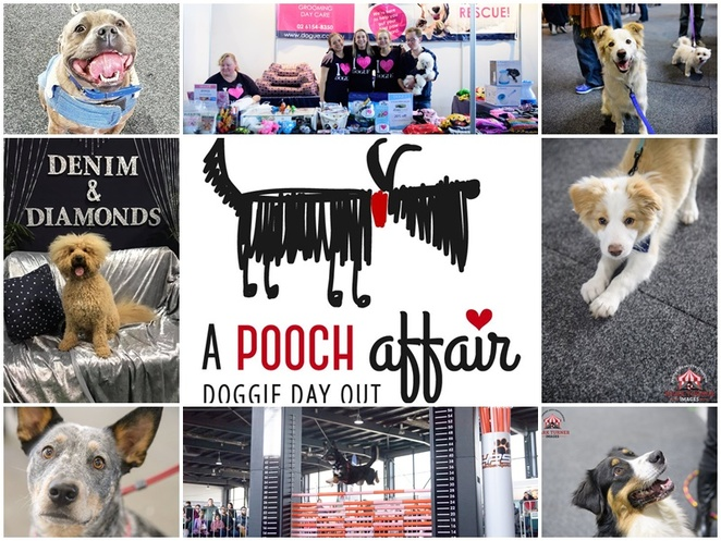a pooch affair, canberra, dogs, events, high tea for dogs, EPIC, exhibition park in australia, june events, dog events in canberra