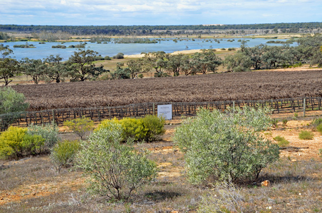Adelaide Kingston On Murray South Australia Riverland Banrock Station Wine Wines Wineries Wetlands Conservation Travel Destinations Get Out Of Town Escape The City