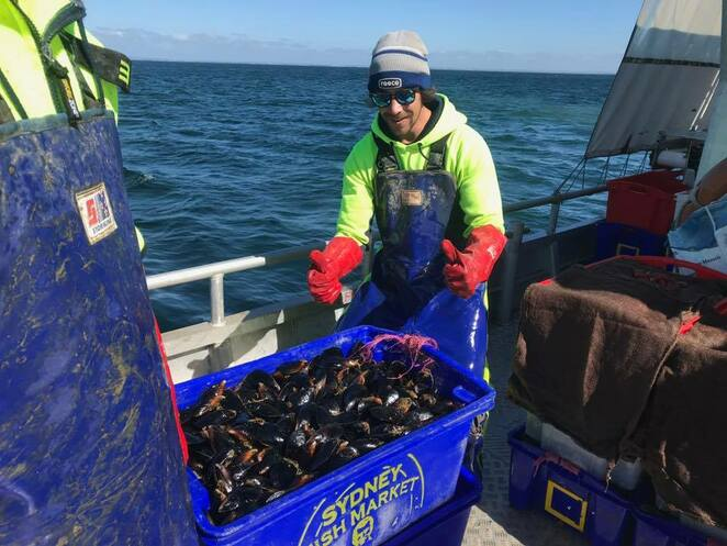 Advanced Mussel Supply