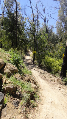 bowden spur mountain bike trail