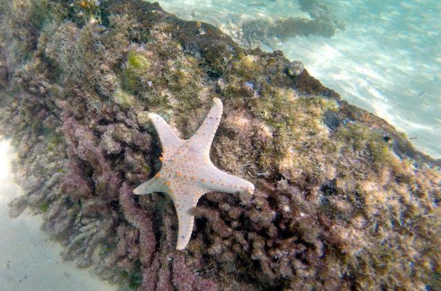 Starfish on one of the Bulwer Wrecks