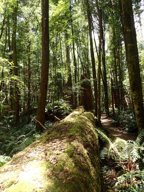 Cumberland Walk, Cora Lynn Falls, Yarra Ranges National Park, bushwalk, Cambarville, Marysville, forest, waterfall