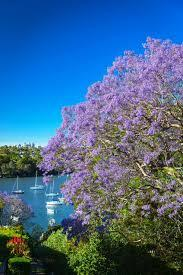 Graham Ross Jacaranda Cruise on Sydney Harbour