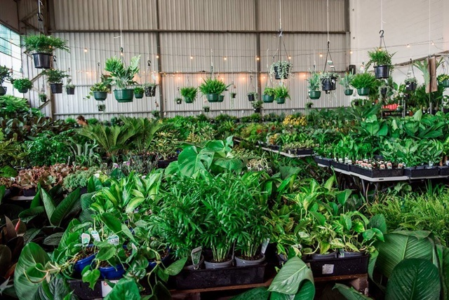 Indoor,plant,sales