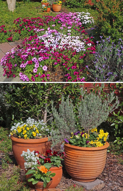 More daisies and flower pots in the same garden.
