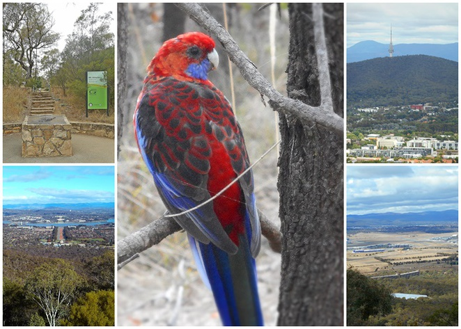 mount ainslie summit walk, kokoda memorial trail, mount ainslie walking paths, canberra, ACT, bushwalks, australian war memorial, walks,