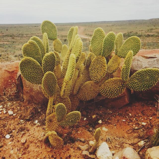 outback, nsw, great western, roadtrip, escape sydney, white cliffs, cactus, desert