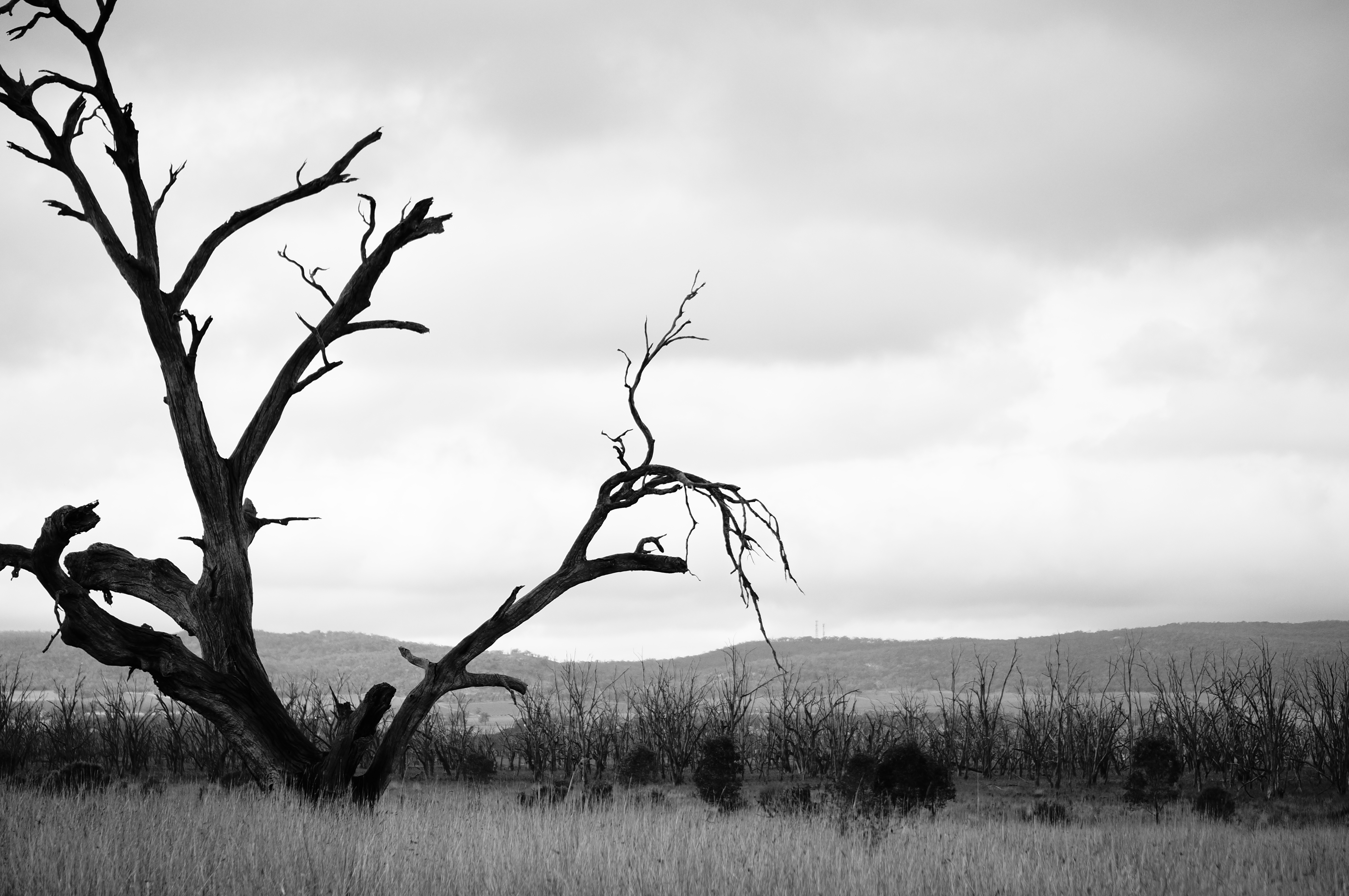 Tips For Black And White Photography Everywhere
