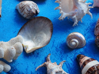 sea shells, Manly Markets, stalls, Manly