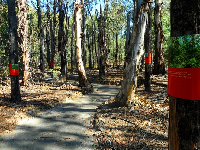 tidbinbilla nature park, tidbinbilla, the santcuary, aboriginal, ACT, canberra,