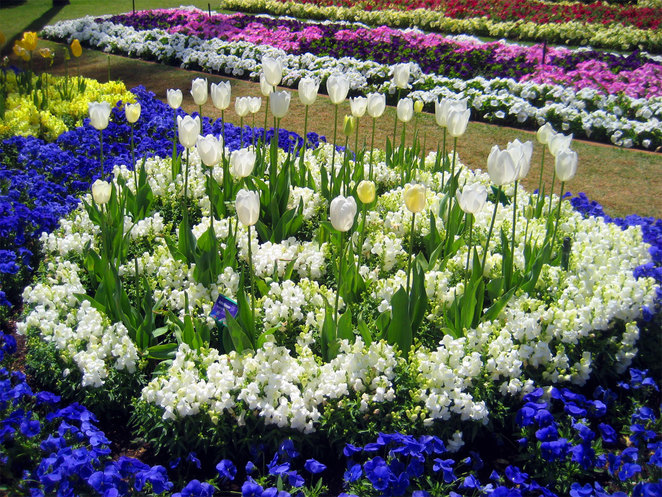 Toowoomba is famous for its gardens, flowers and nurseries