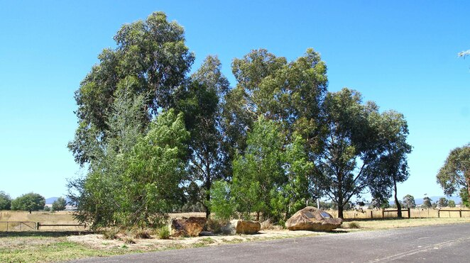 Trees and memorial