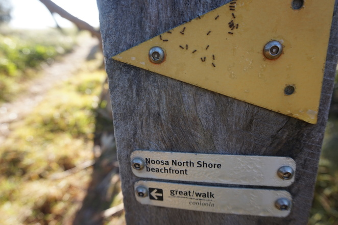 Sign with ants