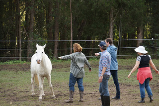 Skerrett Equine, horse, sunshine coast, team building, authenticity, leadership, communication