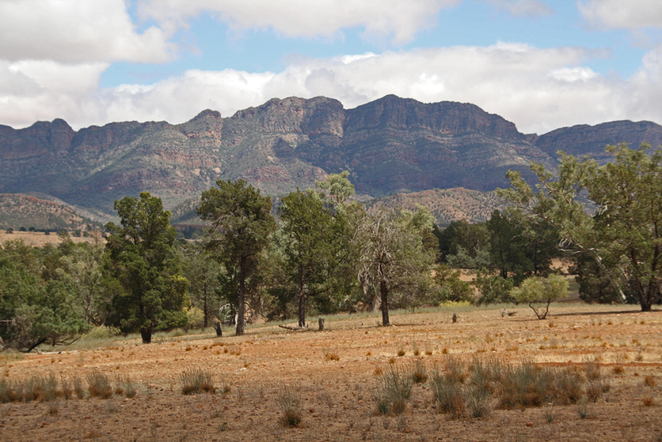 South Australian wildlife, South Australian tourism, Wildlife photography, Flinders Ranges, Moralana Trail