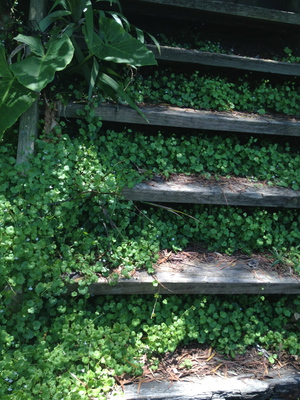 One of many creative stairways in Wendy's Garden