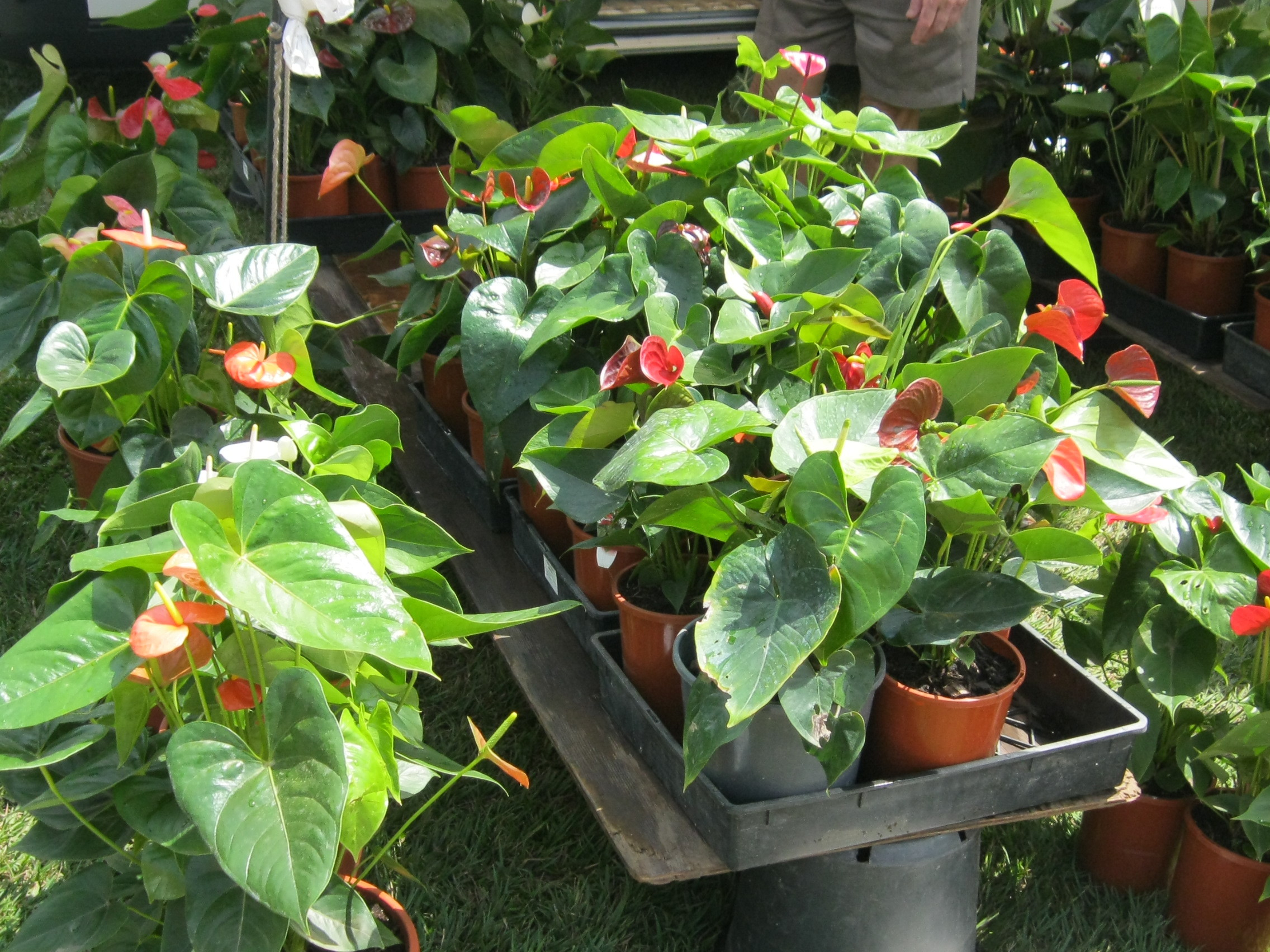 Where to buy plants and pots on the sunshine coast for In a garden 26 trees are planted