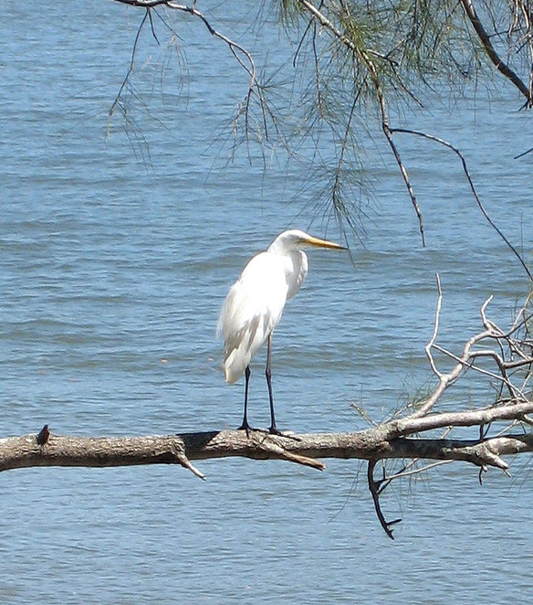 Tinchi tamba is a great place to go bird watching