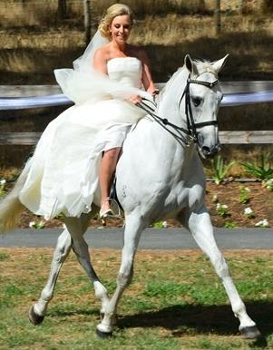 adelaide horse riding,best adelaide horse riding,top adelaide horse riding,adelaide trail ride,best adelaide trail ride,top adelaide trail ride,adelaide horse,adelaide pony party,adelaide stable,adelaide agistment