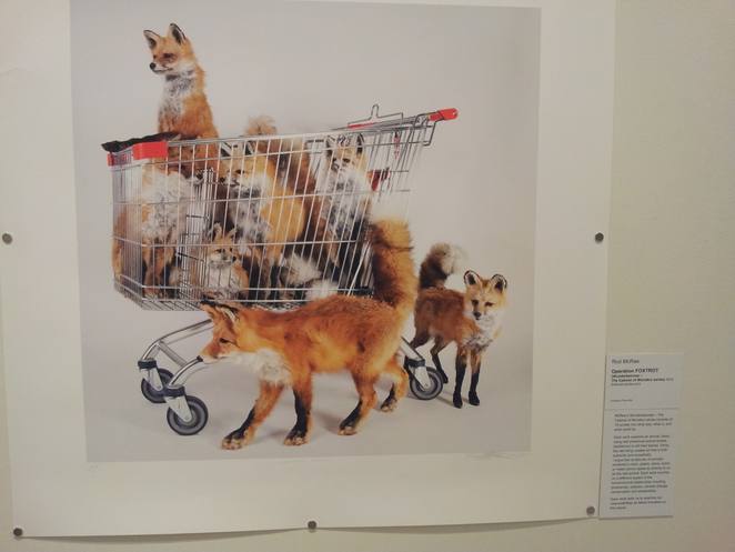 animal fanfair,pine rivers gallery,exhibition