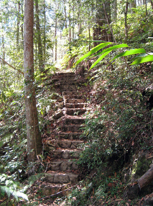 The tracks to and from the creek are steep. The one to Flaxton Mill Road has lots of steps.