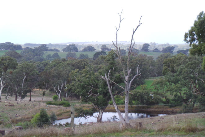 bushwalking, trails, Adelaide, walking