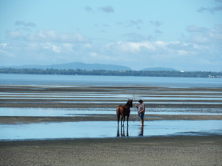 horses, beach, swim, run