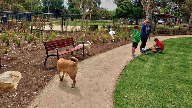 Pityarilla Dog Park, dog park, adelaide, pityarilla, marshmallow park, adelaide, glen osmond road, dog parks, hide and seek
