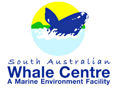 sa whale centre, whale season launch at rundle mall, community event, fun tings to do, whale watching, whale watching tours, free kids activities, kondoli the inflatable whale, whale identification and research program, gawler place, education, sea mammals, whale tour