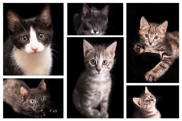 SAFE, pets, adoptions, dogs, cats, Sue Hedley, animal euthanasia, animal rescue