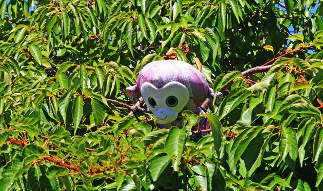 soft toy in tree