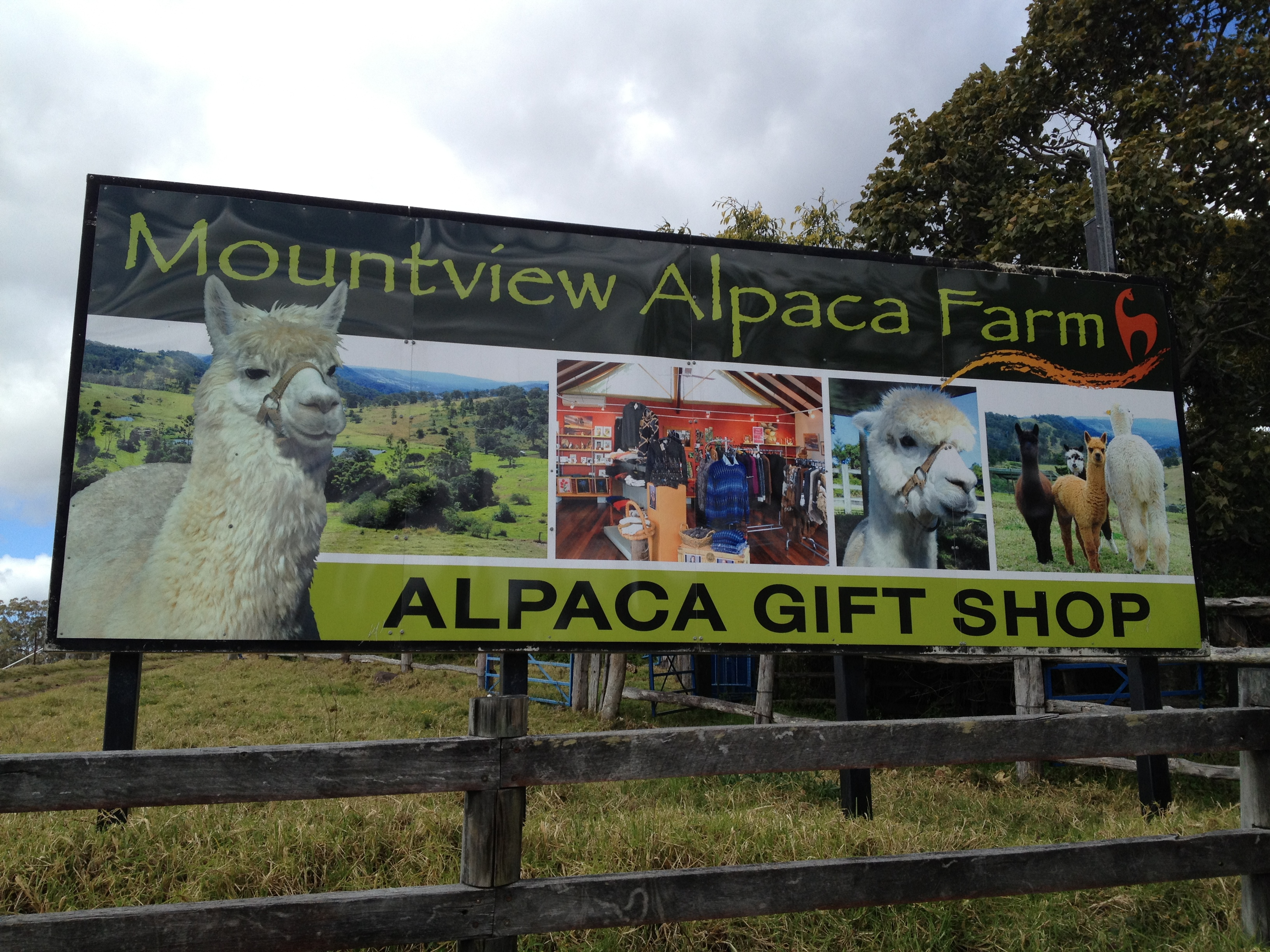 Mountview alpaca farm brisbane for Alpacas view farm cuisine
