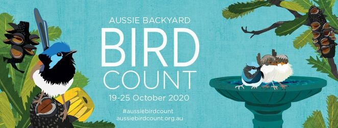 aussie backyard bird count, community event, environmental, fun tigns to do, birdlife australia, online event, connect to the backyard, isolation activity, local park, main street, on the beach, win prizes
